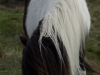 pony-536x800