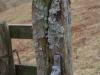 lichenpost