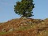 grassingtonmoor