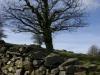 treewall
