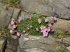 flowers-800x536