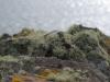 lichen-800x536