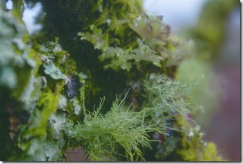 plantcollection