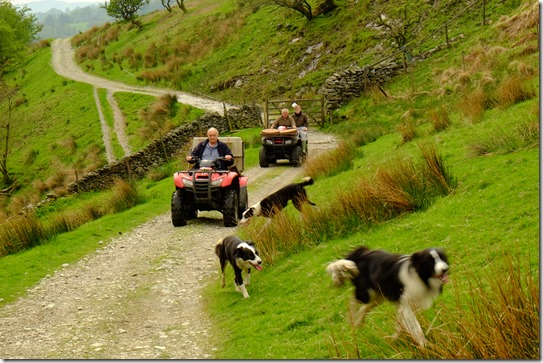 #farmers, #dogs, #quadbikes