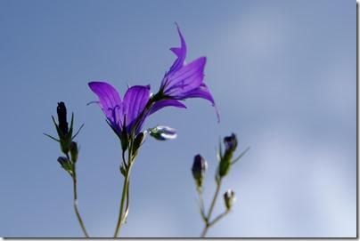 bluelowers