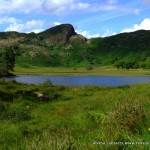 Lingmoor and Blea Tarn