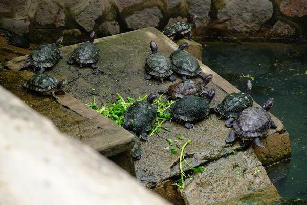 Turtle pond Jade Emperor Pagoda