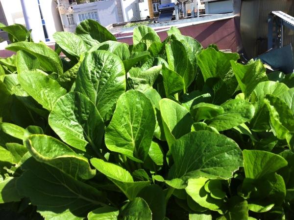 SaladLeaves