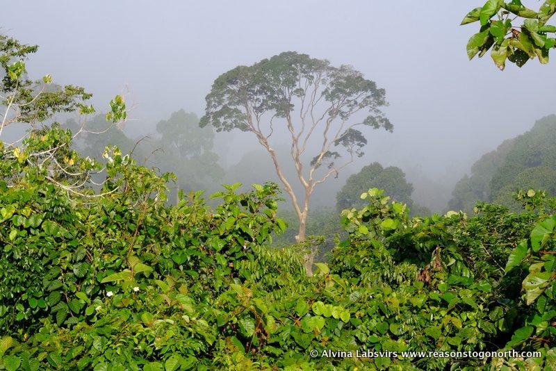 Mistytree