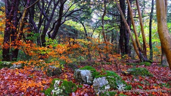 Woodland Colour
