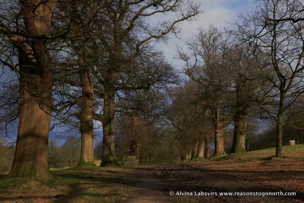 Avenue of Oaks Levens Park