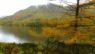 Autumn Colours and Mist