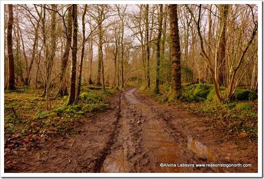 Silverdale woods