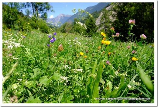 flowers Ferret