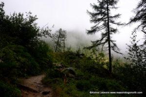 Bovine Route