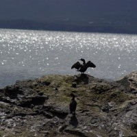 Seabirds and Seals
