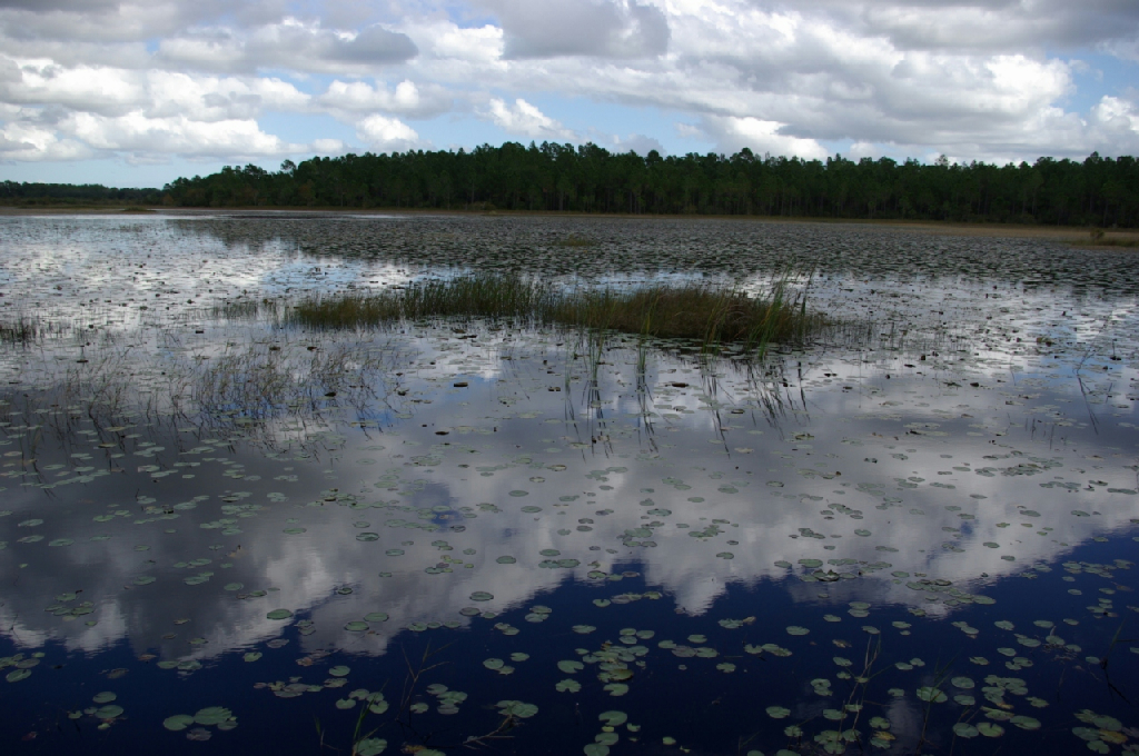 Lake Bonnet Split Oak Park Florida