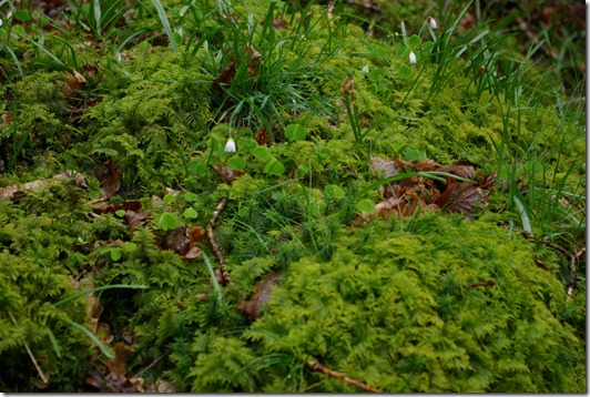 Small ferns